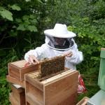 Bijen Nieuw en Meer