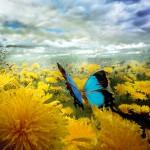 Paardevlinder